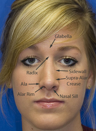 Rhinoplasty Anatomy | Rhinoplasty in Seattle